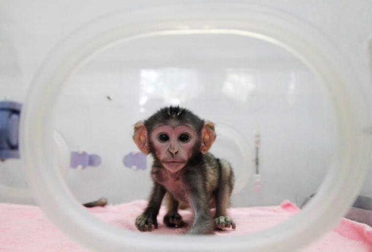Image: Newborn Patas monkey is pictured in an incubator at a zoo in Zhengzhou