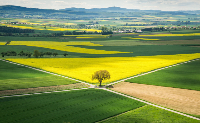 Image: Sun shines on a rapeseed field in Muenzenberg