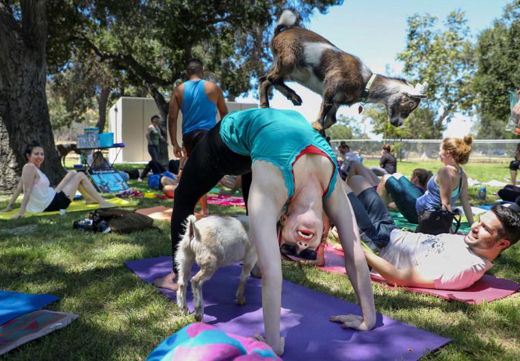 Image: Goat yoga class in Glendale, California