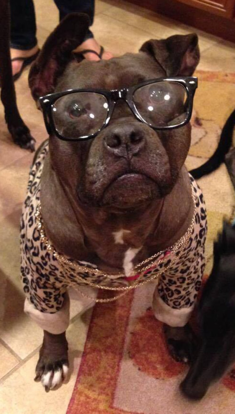 dog gets contact lenses! glasses