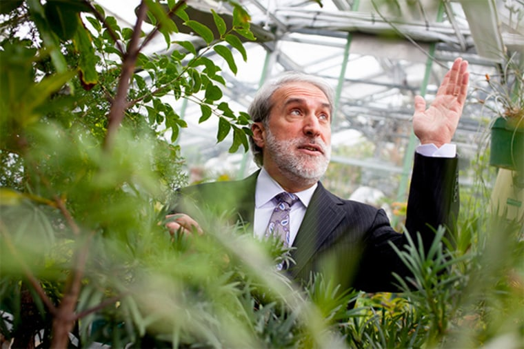 Nocera's bionic leaf uses the principles of photosynthesis to help turn CO2 emissions into energy.