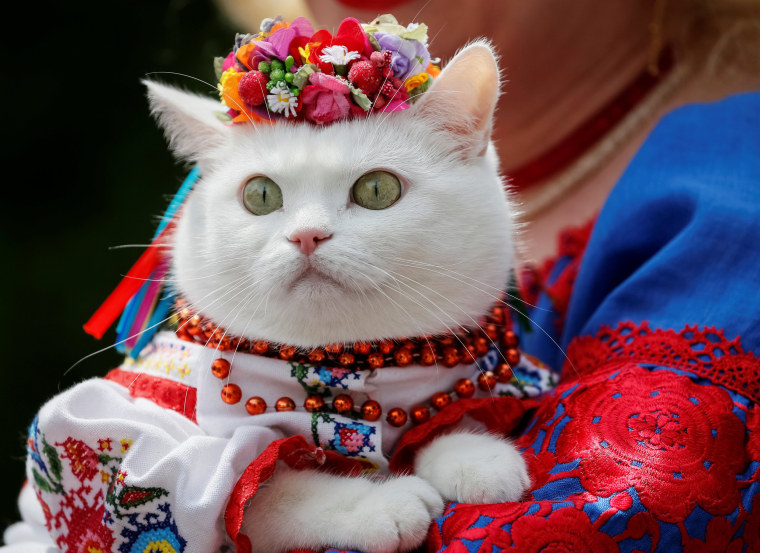 Image: A woman dressed in a traditional Ukrainian embroidered shirt holds her cat as she take part in an embroidered shirt parade in central Kiev
