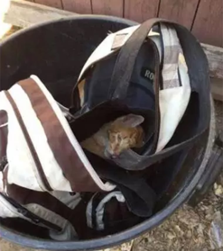 Hiro the cat had been left in a backpack, in a trash can.