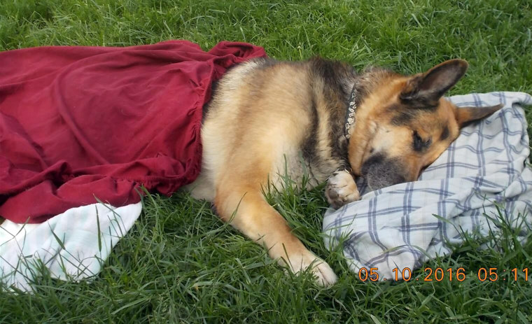 Volunteers make prayer blankets for strangers' sick and dying pets