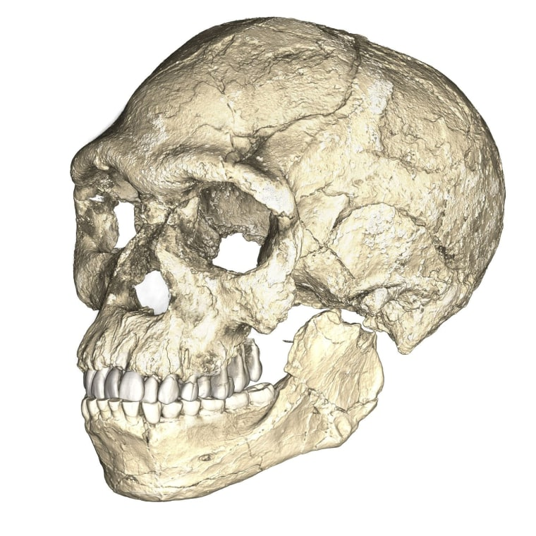 Image: A composite reconstruction of the earliest known Homo sapiens fossils from Jebel Irhoud in Morocco is shown in this handout photo