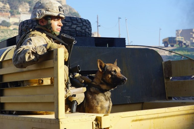 "Matt Morales (Ramon Rodriguez) and his dog ""Chico"" in new film, Megan Leavey"