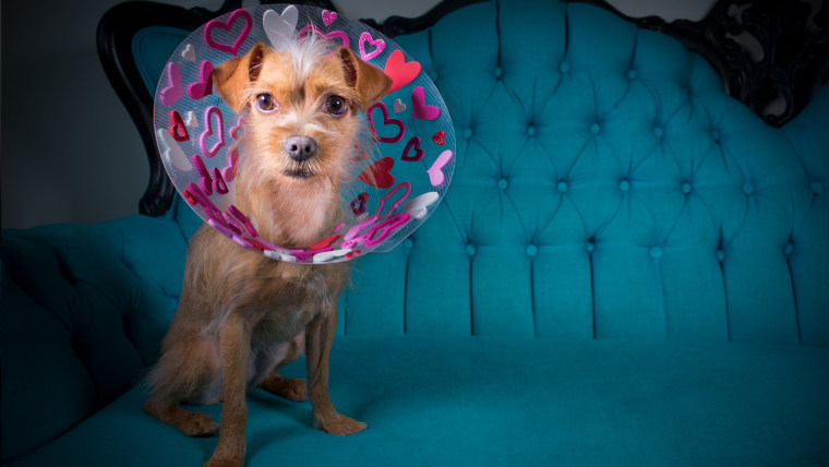Photographer 'blings out' shelter dogs' recovery cones to help them find homes