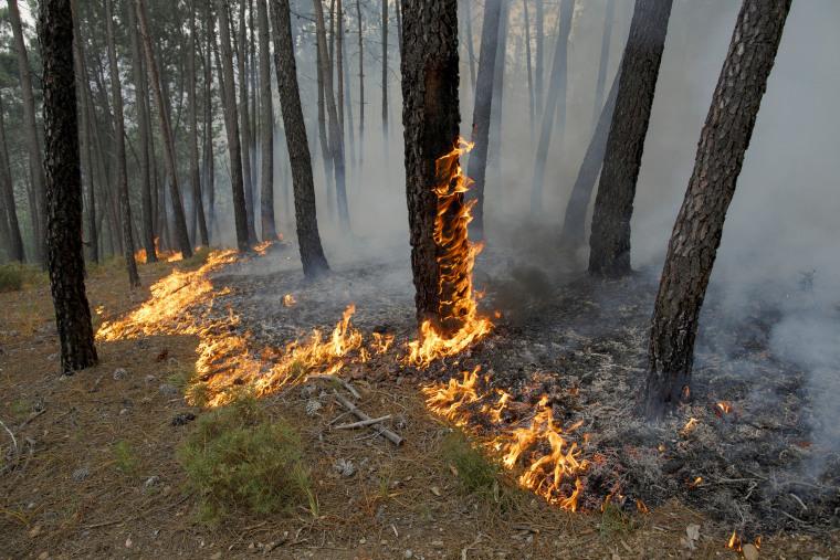 Image: Trees still burn on June 19, near Castanheira de Pera.