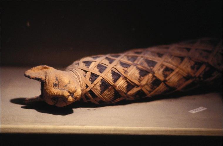 Image: An Egyptian cat mummy
