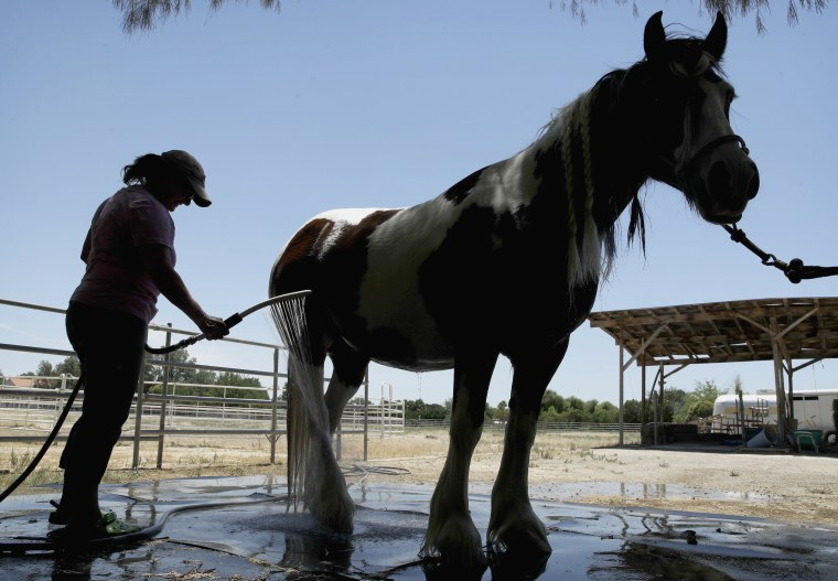 Image: A woman cools down her horse