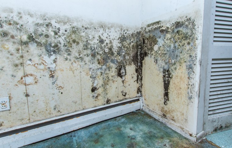 Mold growth on an interior wall.