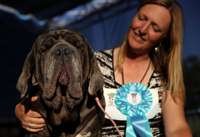 Image: Shirley Zindler of Sebastopol, California sits with her Neapolitan Mastiff named Martha after after winning the 2017  World's Ugliest Dog contest at the Sonoma-Marin Fair on June 23, 2017 in Petaluma, California.