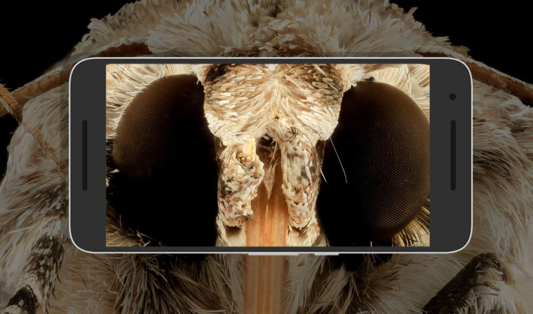 Close up photo of a southern armyworm -- a moth in North America