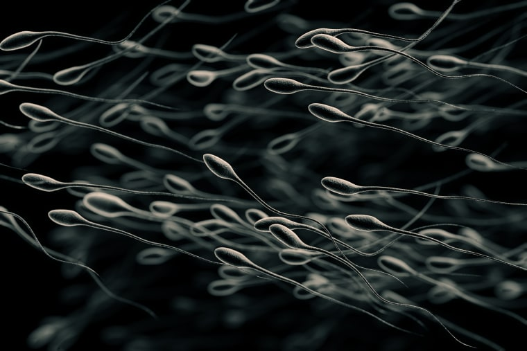 Image: Stylized illustration showing a group of sperm swimming.