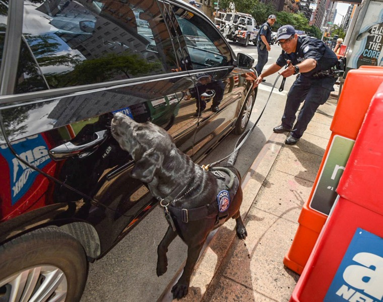 Image: A dog belonging to the counter-terrorism unit sniffs a car in New York