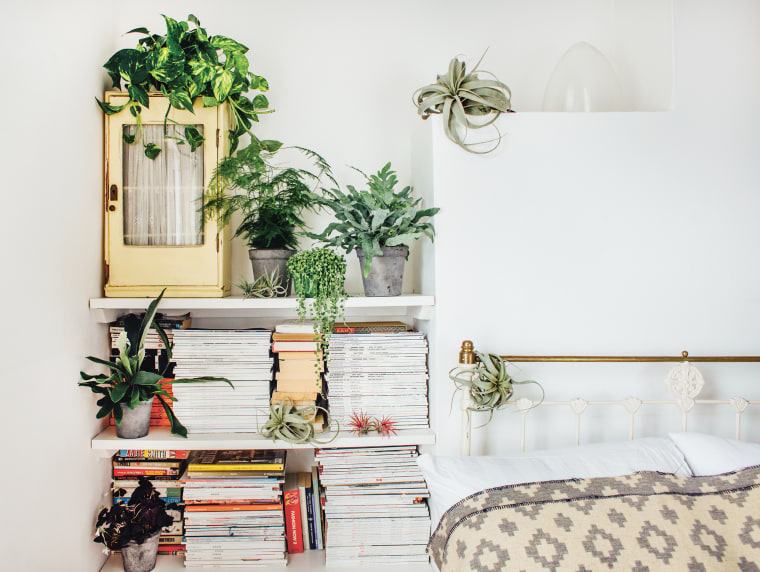 Image: Plants in a bedroom