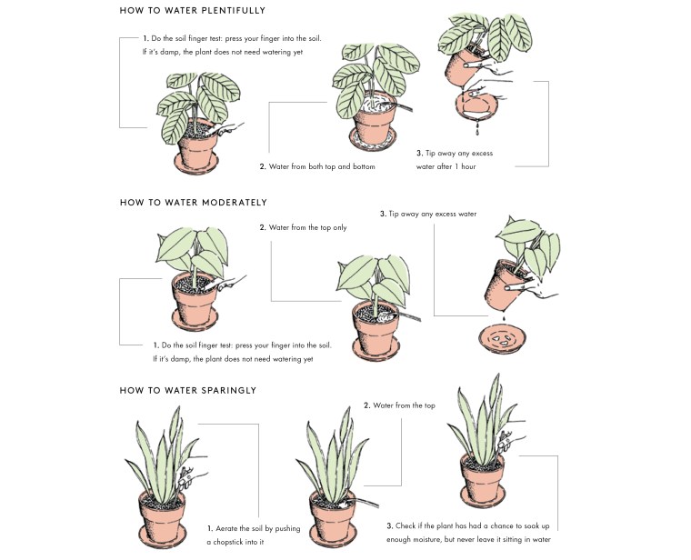 Image:  Illustration showing watering instructions