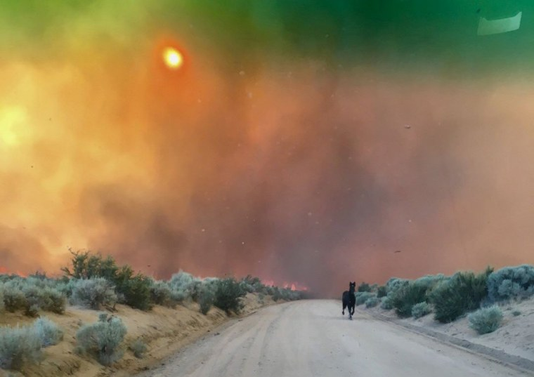 Image: A horse runs from burning grasslands of the Long Valley fire near Doyle