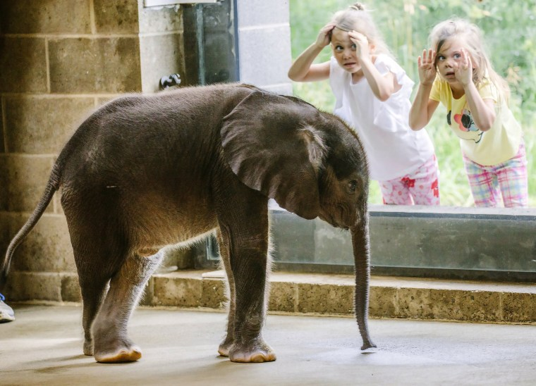 Image: Young visitors view a 4-week-old baby elephant as it meets the public for the first time