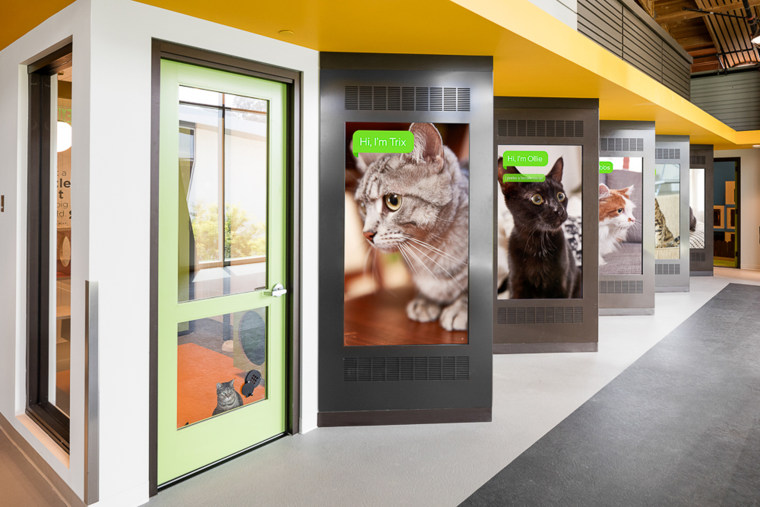This $20 million pet adoption center is the future of animal shelters