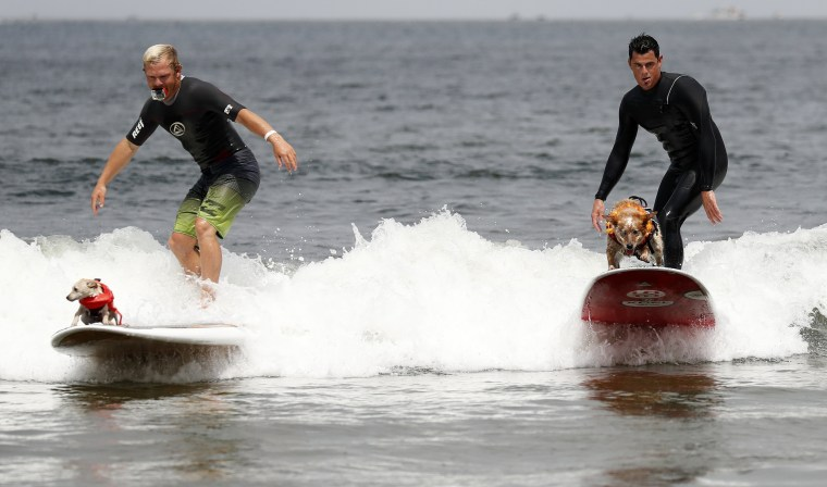 Image: World Dog Surfing Championships in Pacifica, California