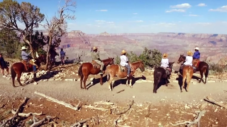 """Al's """"Summer of Yes"""" takes Brooklyn kids to Grand Canyon"""
