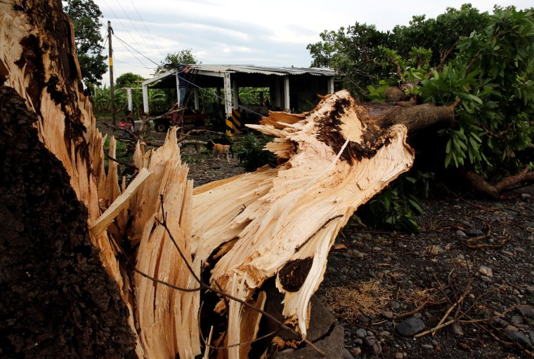Image: A fallen tree is seen next to a house after the passing of Hurricane Franklin