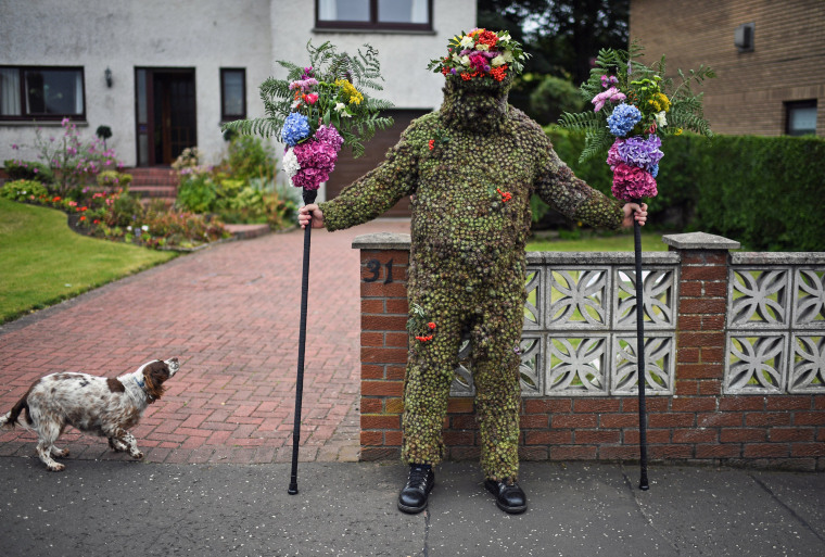 Image: Burdock Covered Burry Man Brings Luck To Scottish Town
