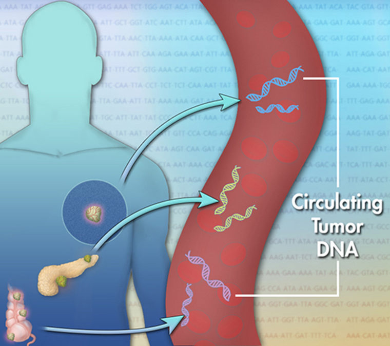 Scientists have discovered that dying tumor cells release small pieces of their DNA into the bloodstream. These pieces are called cell-free circulating tumor DNA (ctDNA).