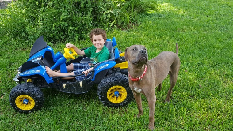 Pit bulls save kids from snake attack