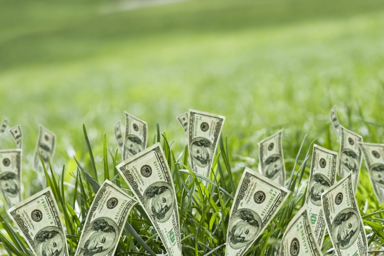 Photo: Money growing in grass