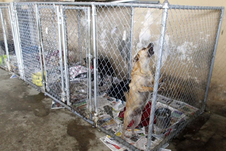 Image: Dog Shelter
