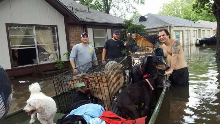 Hurricane Harvey animal rescues