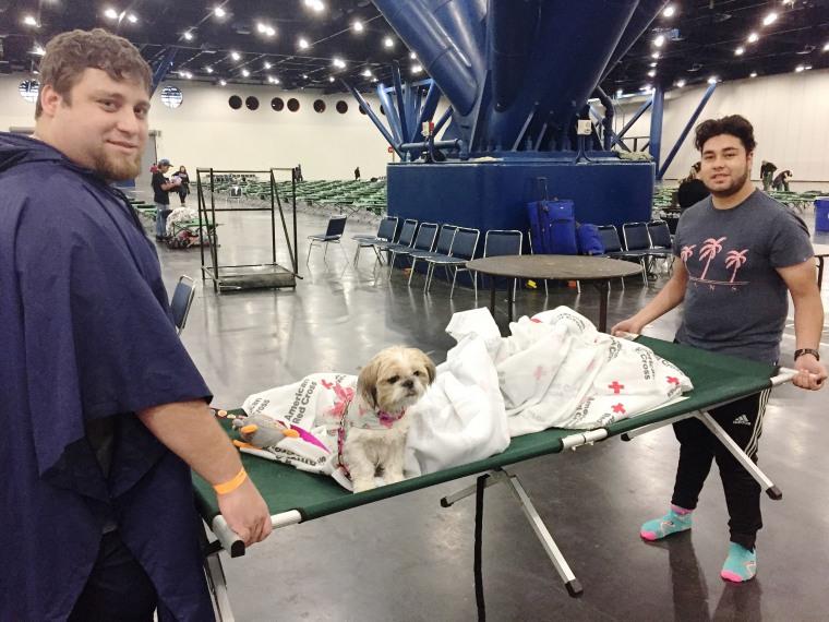 Hurricane Harvey animal rescues: Evacuee dog in Houston