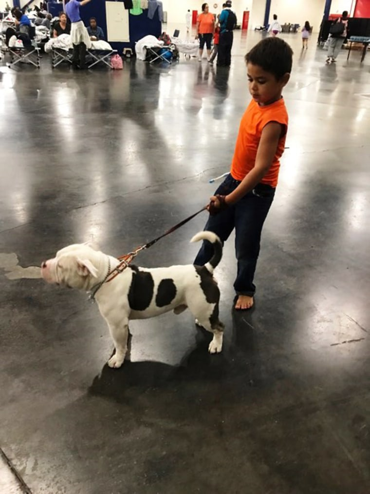 A boy and his dog at the George R. Brown Convention Center in Houston.