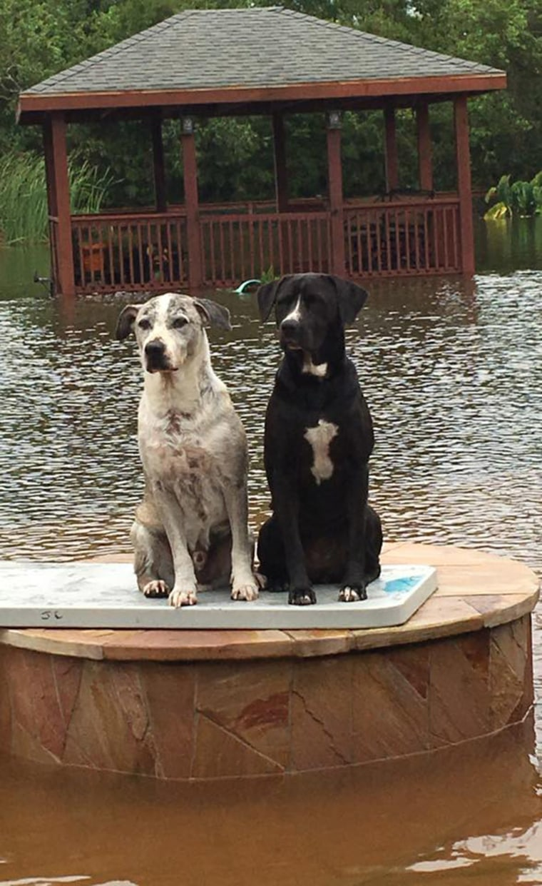 Dogs trapped in Houston floods from Hurricane Harvey