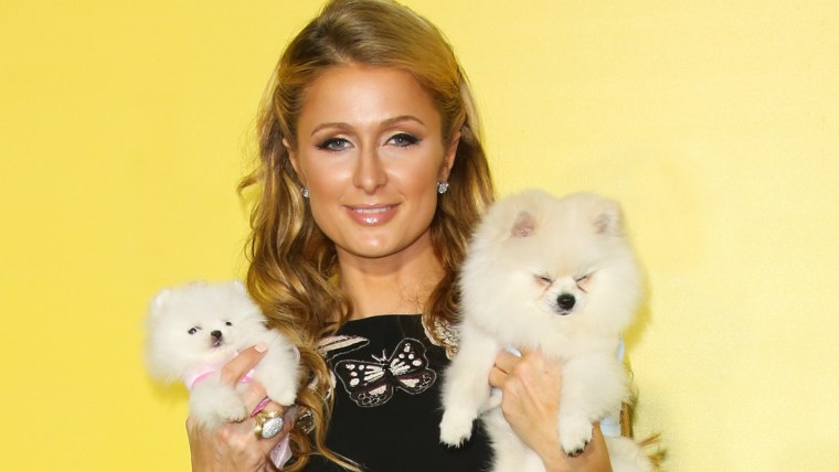 Paris Hilton and her dogs