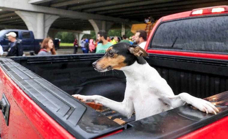 Image: Harvey Pets