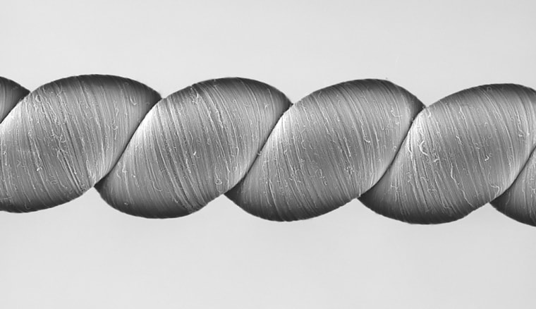 A scanning electron microscope image of coiled twistron yarns.