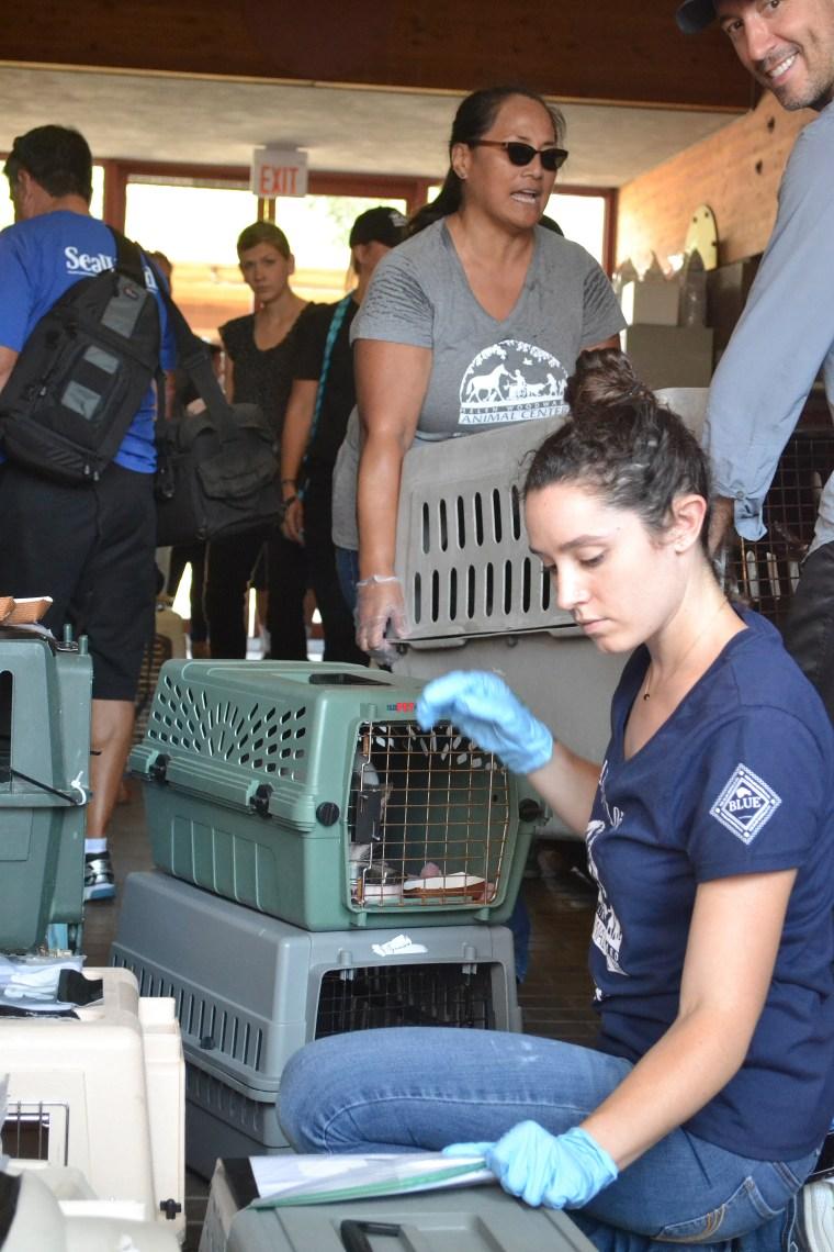 The Harvey survivors arrive in San Diego, California.