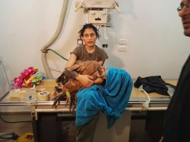 Image: Roni Elias holds an injured vulture