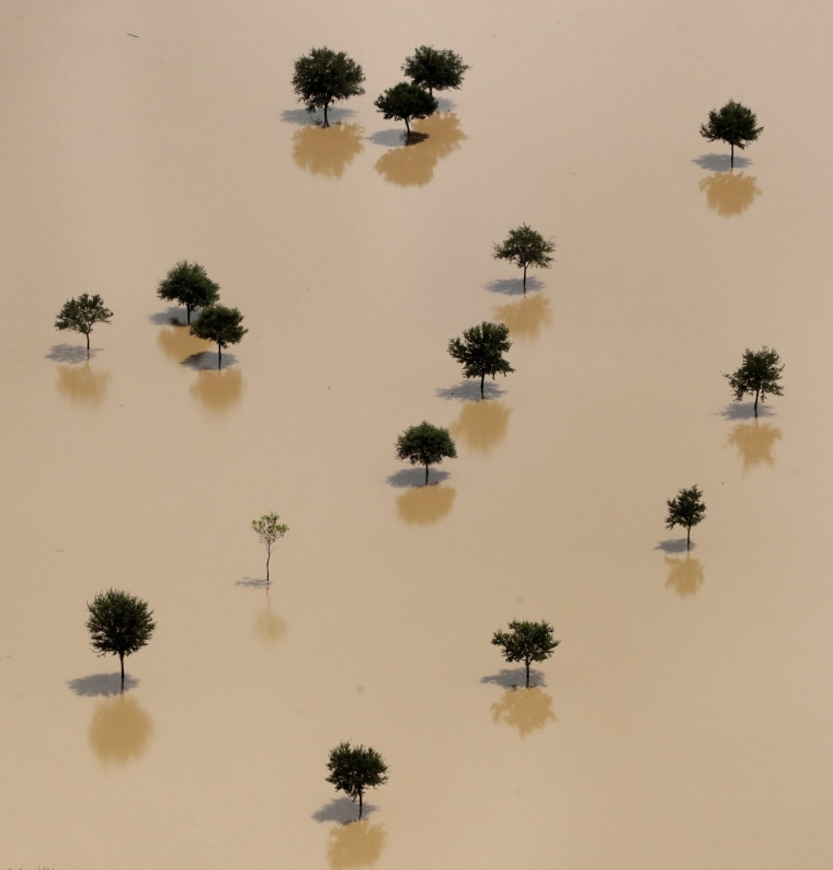 Image: Trees rise from a field submerged by water