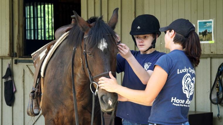 Lucky Orphans horse farm