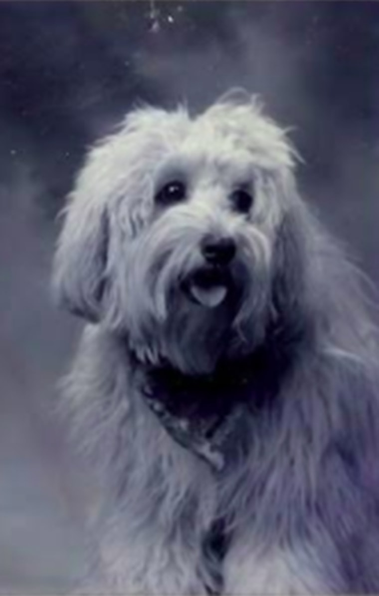 Kate Griffin recognized her childhood dog, Cami, a decade later