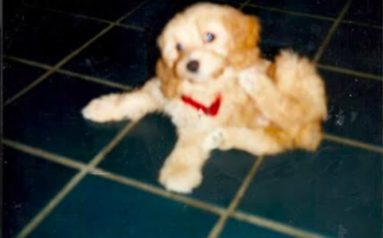 Kate Griffin's dog, Cami, as a puppy