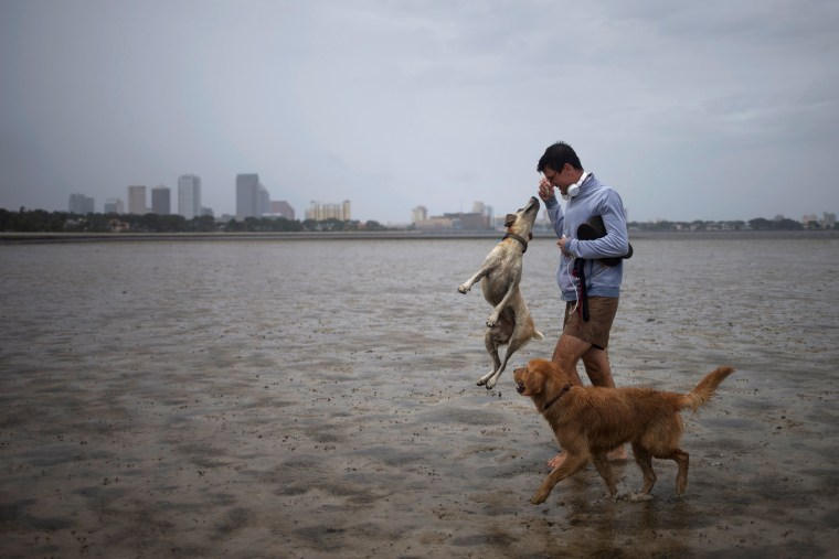 Image: The Tampa skyline is seen in the background as local resident plays with his dogs in Hillsborough Bay ahead of Hurricane Irma in Tampa