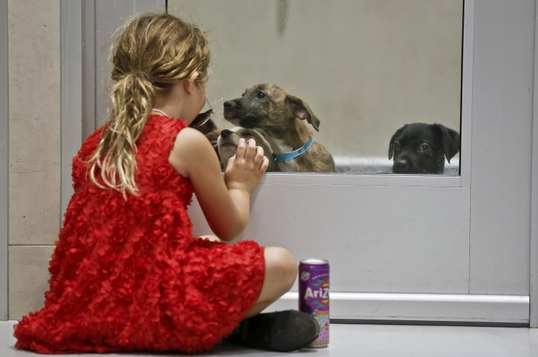 Image: A young girl sits and plays through a glass door with puppies secured inside a kennel at an animal shelter, Aug. 24, 2017, in New York.