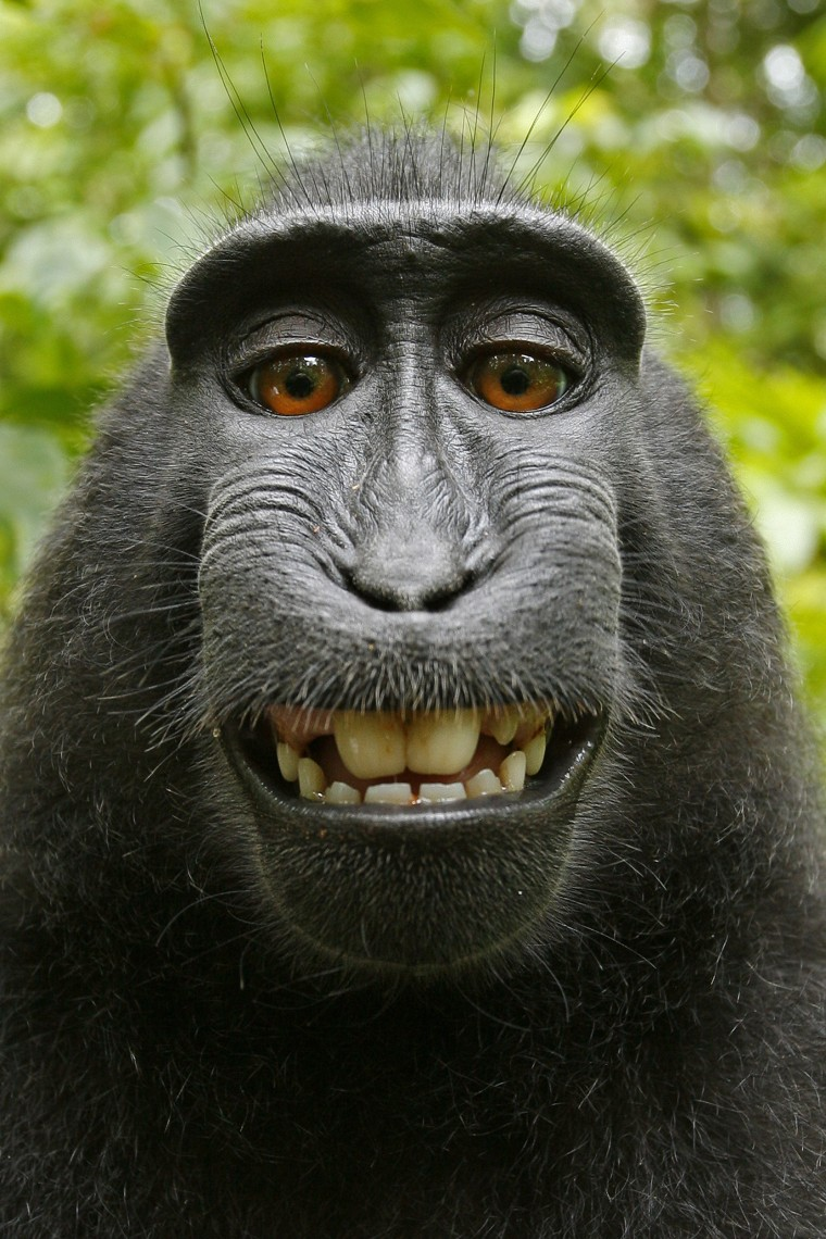 Image: Monkey Takes Photos On Camera