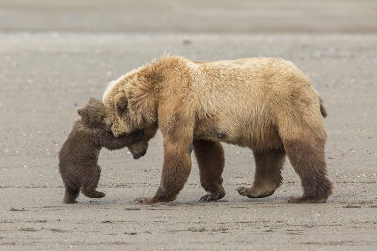 Image: Bear Hug
