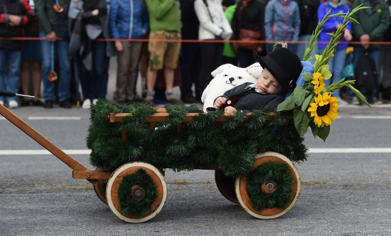 Image:  Little Ben sleeps in his trolley during the traditional costume and riflemen parade during the second day of the 184th Oktoberfest beer festival